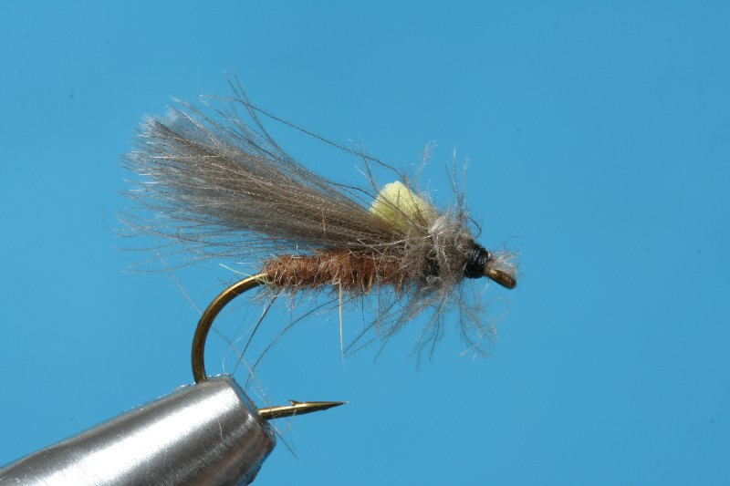 CDC-Sedge10